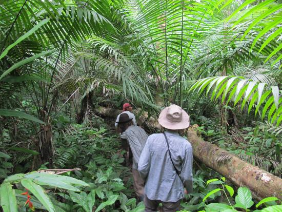 Ecological Jungle Trips : Walking in the primary Jungle
