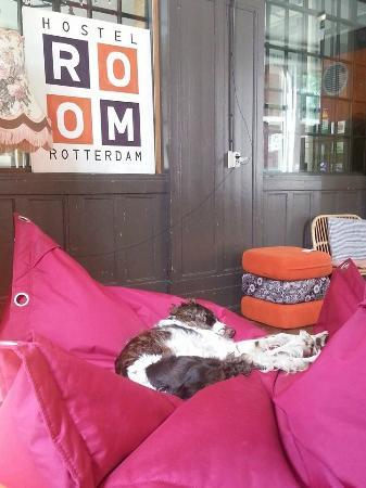 Hostel Room Rotterdam: Lexie, part of the hostel staff