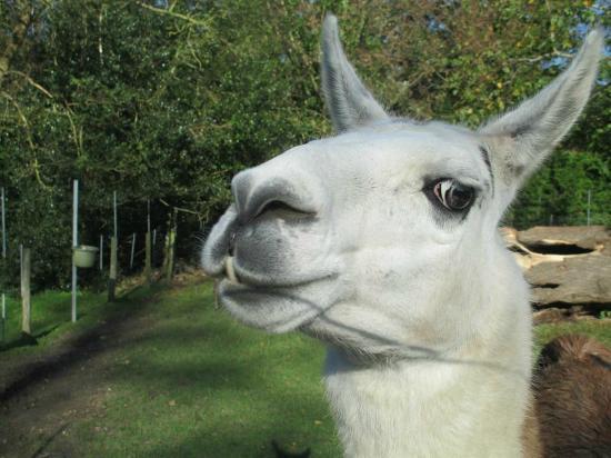 Staunton Park: Hello....  who you looking at ????