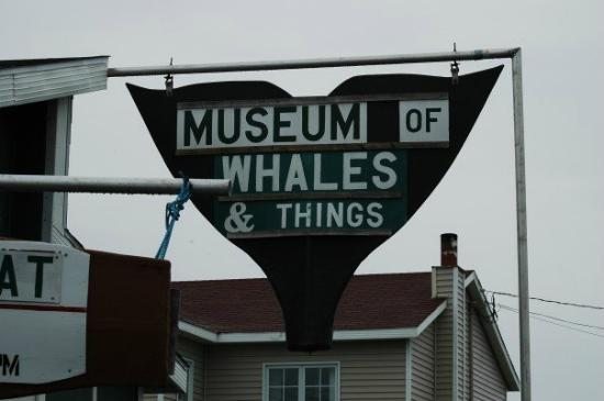 Museum of Whales and Things