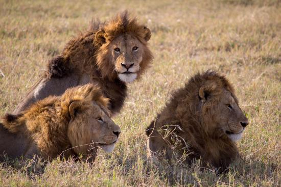 Warrior Trails Day Tour: Saw these three in Ngorongoro (thanks to Nicolas)