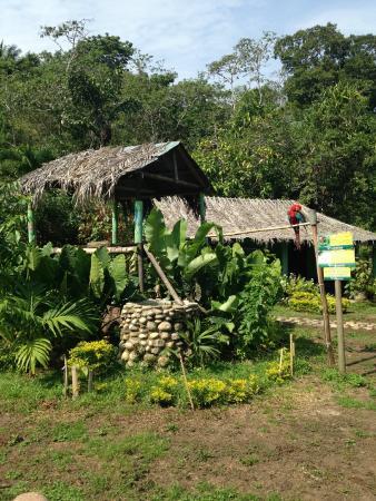Taironaka Turismo Ecologico y Arqueologia : Cerca al restaurante