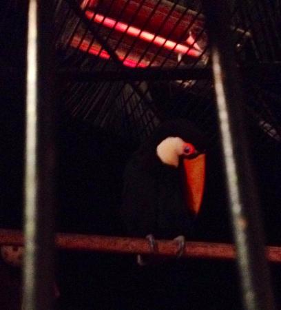 Mozambique Restaurant: See the beautiful birds...