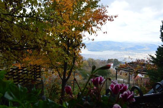 Theasis-Pelion: Η θέα από το παράθυρο του δωματίου μας..