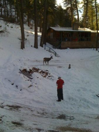 Mountain Air Cabins : Feeding the deer