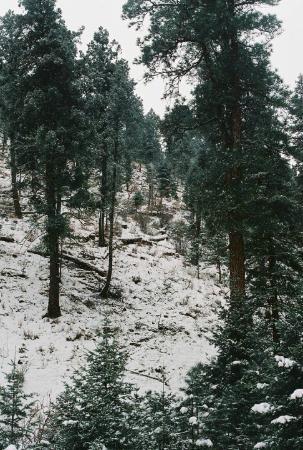 Mountain Air Cabins : Back porch view