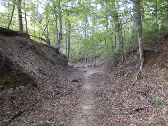 Natchez, MS: The Sunken Trace - the original trail where settlers and Native Americans have walked before us