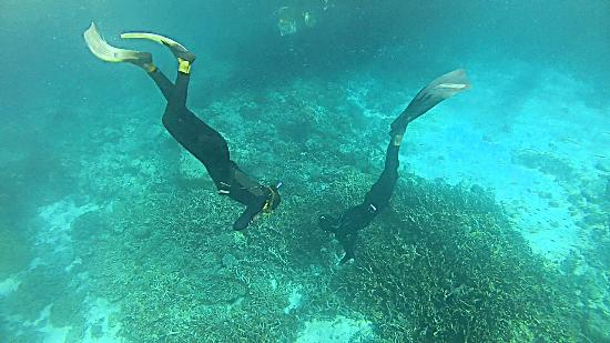 Element Freedive: Diving for turtles after the course