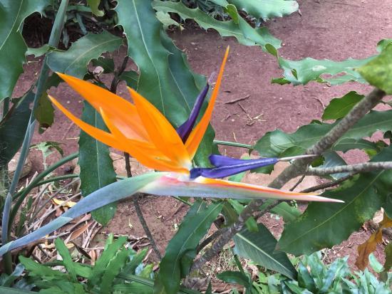 Molokai, Hawái: A pretty flower