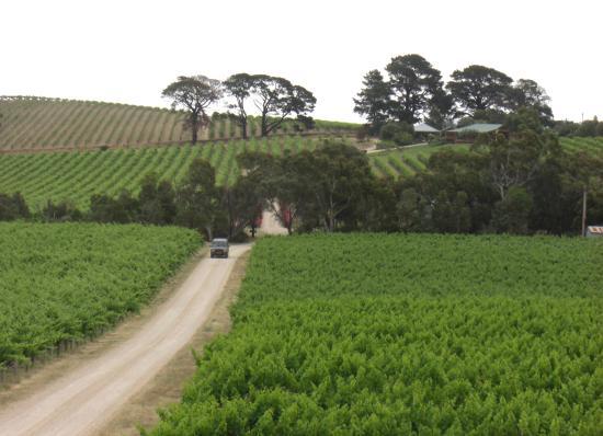 Dog Ridge Winery