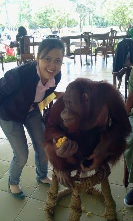 Royal Safari Garden Resort & Convention : Good Facilities and Recommended Hotel at Bogor Puncak