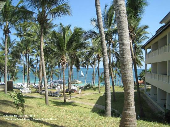 Flamingo Beach Hotel: View from the hotel grounds towards the palm-fringed beach