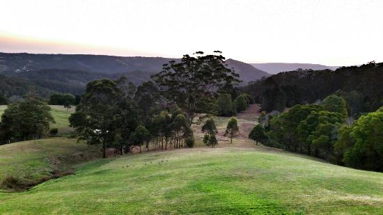 Blue Summit Cottages: View from King Parrot cottage