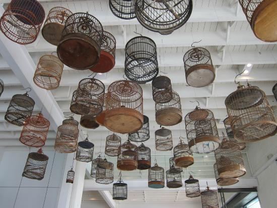 White Rabbit Gallery: The birds have flown