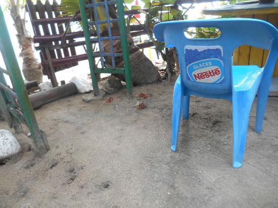 Le Tam Tam Beach : Des ptits crabes gourmands....