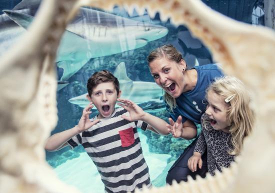 Kattegatcentret - Denmark's Shark Centre