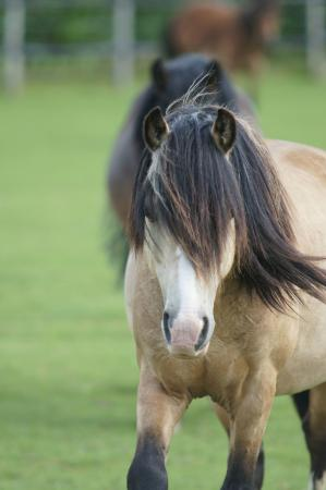 Elvis is one of the centre's gorgeous adoption ponies
