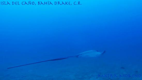 Stingray, Isla del Caño, Drake Bay, Costa Rica