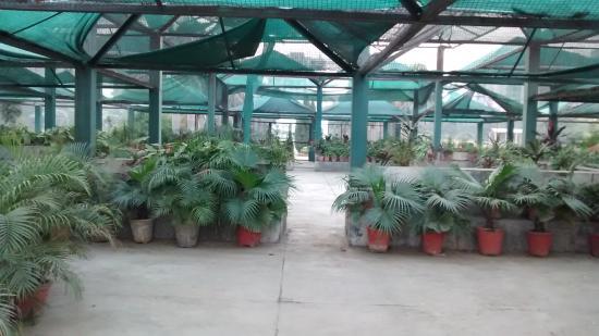 Tau Devi Lal Bio Diversity Park