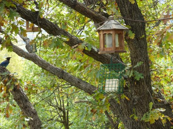 Country Sunshine Bed and Breakfast: Active birdfeeder off the back porch.