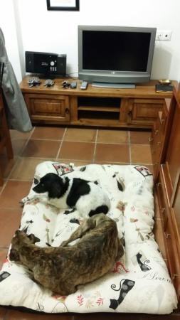 San Martin Apartamentos: Acepta mascotas sin ningún problema. Mis peques en su cama de viaje. Jaja