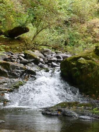 Mapleton, OR: Sweet Creek Falls