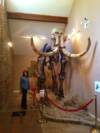 Museum of Native American History : Mastodon