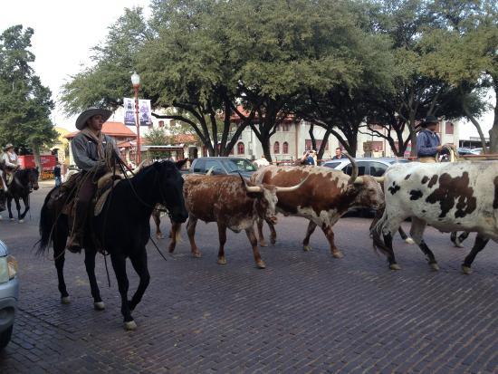 Fort Worth Stockyards National Historic District: Stockyard - Forth Worth
