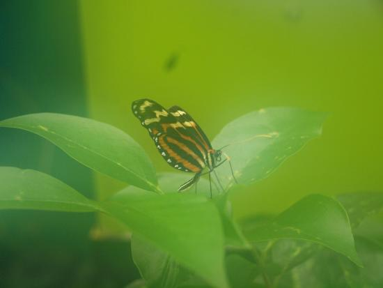 Tropical World: Butterfly