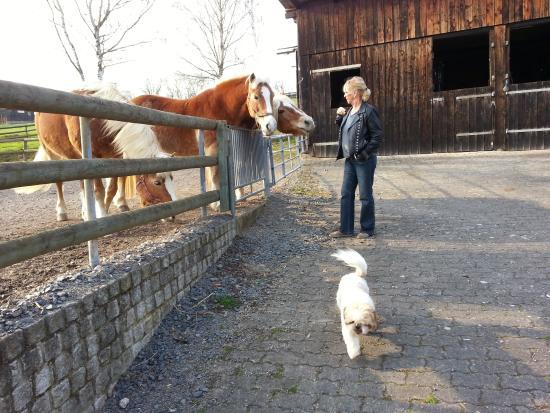 Landgasthof & Hotel Jossatal: fra hestefolden