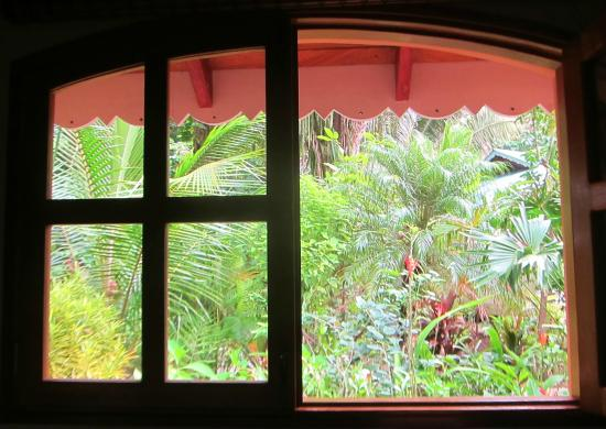 El Pequeno Gecko Verde: View from one of our cabin windows