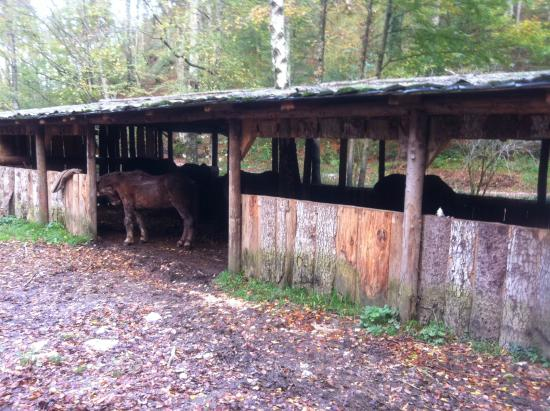 Ranch Bubac