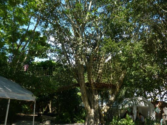 Everglades International Hostel: Vista del jardín