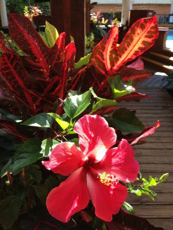 Best Western Belize Biltmore Plaza: Tropical plants