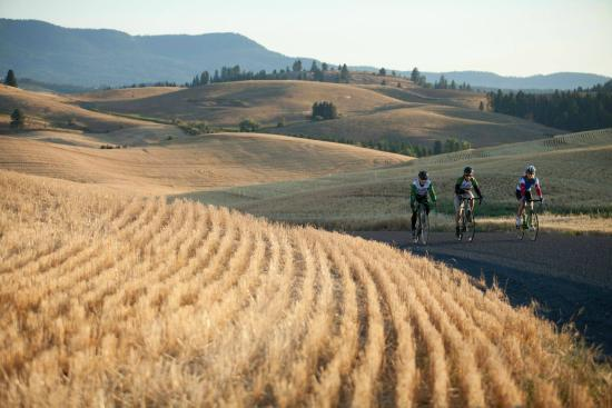 Moscow, ID: Enjoying some gravel action in the rolling hills of the Palouse.
