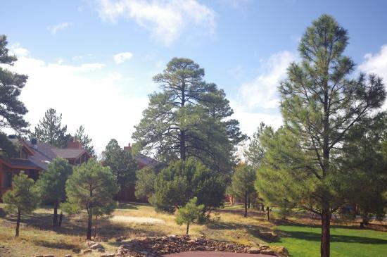 Wyndham Flagstaff Resort: View