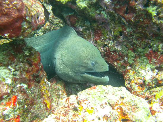 Namloo Divers - Day Diving : Morray's are a common sighting