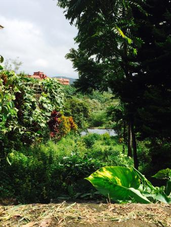 Mundax Homestay Yoga Retreat: The garden