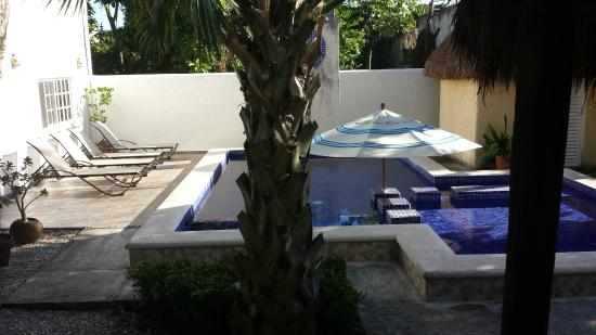 Villa Escondida Cozumel Bed and Breakfast : The pool