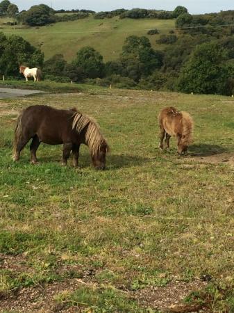 Lower Campscott Farm : On the farm