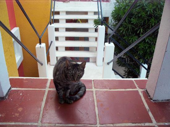 El Acuario Hotel: Coco Kitty
