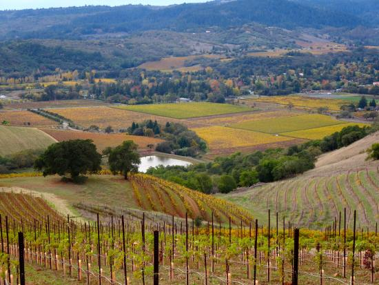 Kunde Family Winery : View from the top