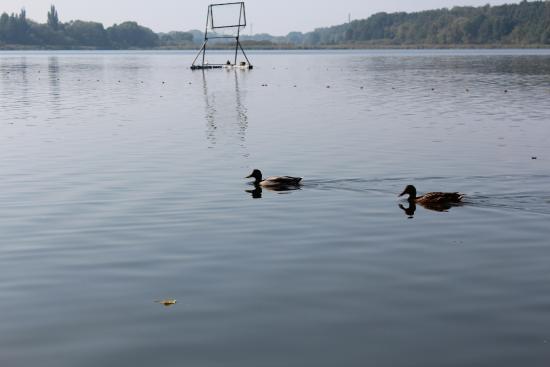 Swarzedz, Πολωνία: Jezioro swarzędzkie by Vanalai