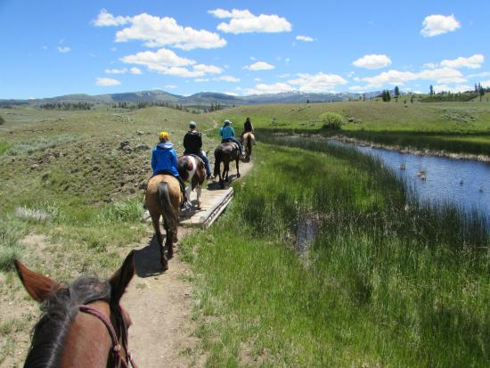 Experience The Back Country Of Yellowstone National Park By Horseback Review Of Yellowstone