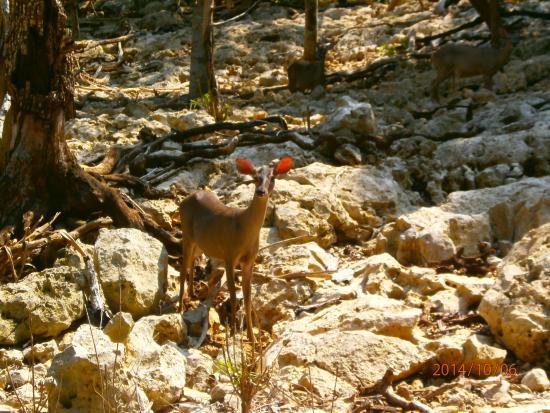 Cenote Chaak Tun  Posando para la foto. Cenote Chaak Tun  Debajo del sol 9a016ae3a26