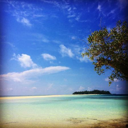 The Reef Dive Resort: Amazing beach