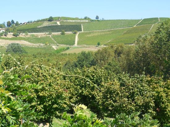 Agriturismo Casa Ressia: View of surrounding vineyards