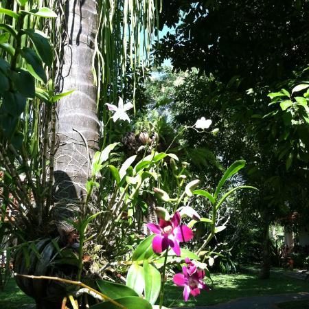 Santhiya Tree Koh Chang Resort: Walking through the resort