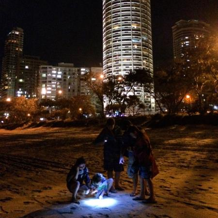 Focus Apartments: Our children loved looking for crabs at night