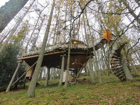 Gwydy hw picture of living room treehouses machynlleth for 8 living room tree houses powys
